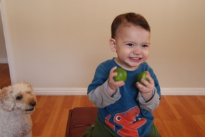 Luckily Jack is just as  happy playing with pesticide-free lemons as with plastic balls
